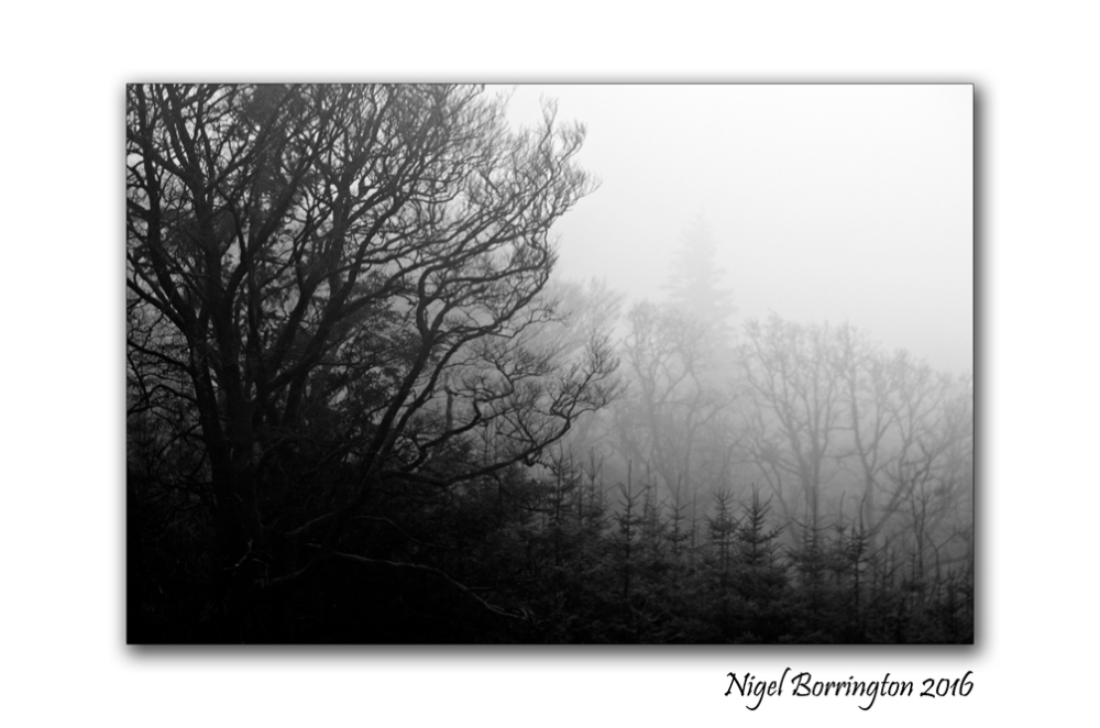 winters-trees-in-the-fog-december-2016-nigel-borrington-01