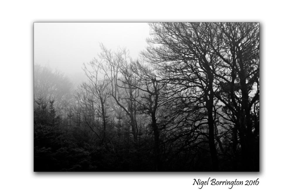 winters-trees-in-the-fog-december-2016-nigel-borrington-02