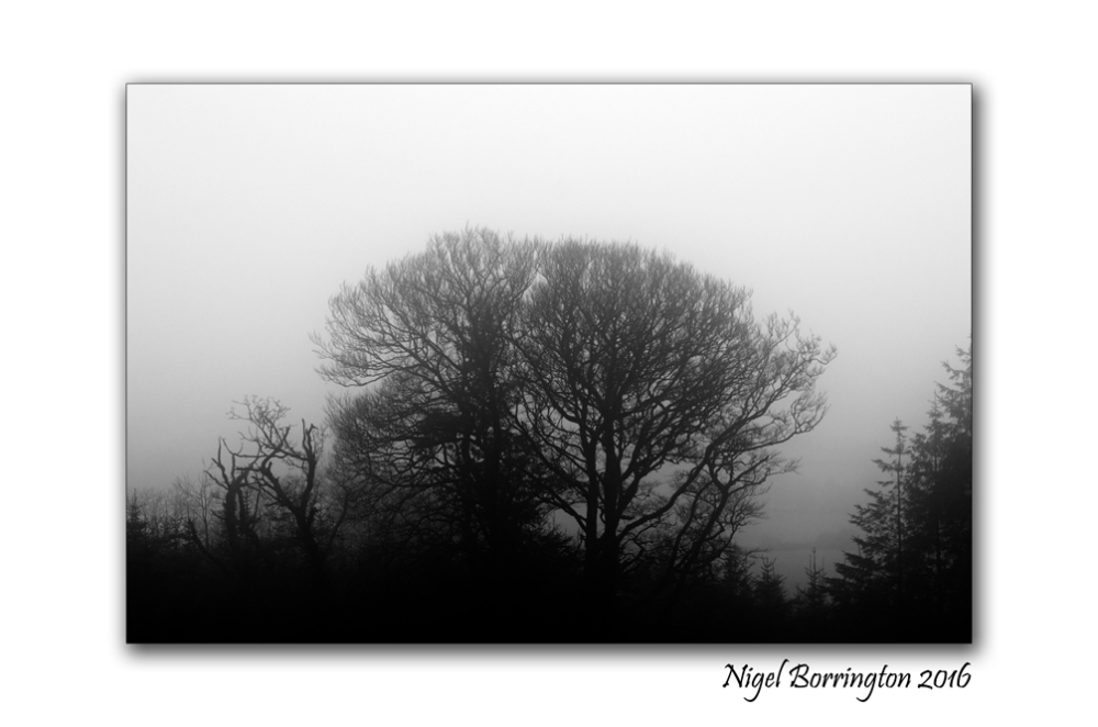 winters-trees-in-the-fog-december-2016-nigel-borrington-03