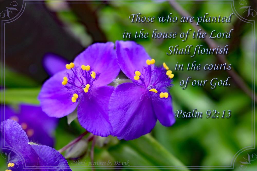 Psalm 92;13